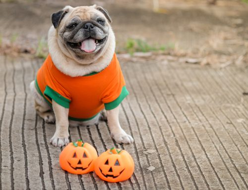 How to Prep Your Pet for Halloween