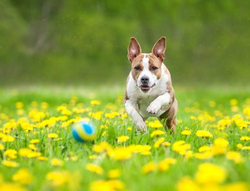 Choosing the Right Flea and Tick Prevention for Your Pet