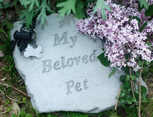 4 Ways to Cope With Pet Loss